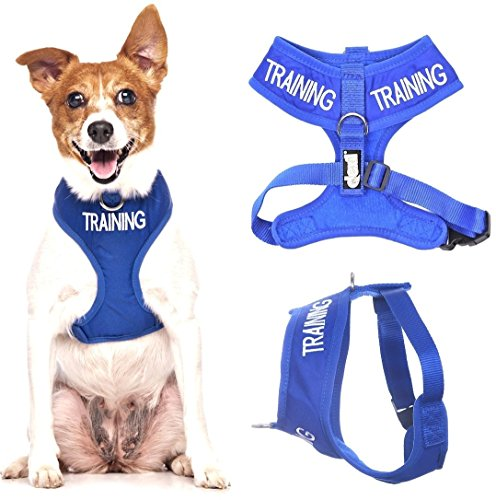 Blue TRAINING  Color Coded Small Vest Dog Harness (Do Not Disturb) PREVENTS Accidents By Warning Others of Your Dog in Advance!