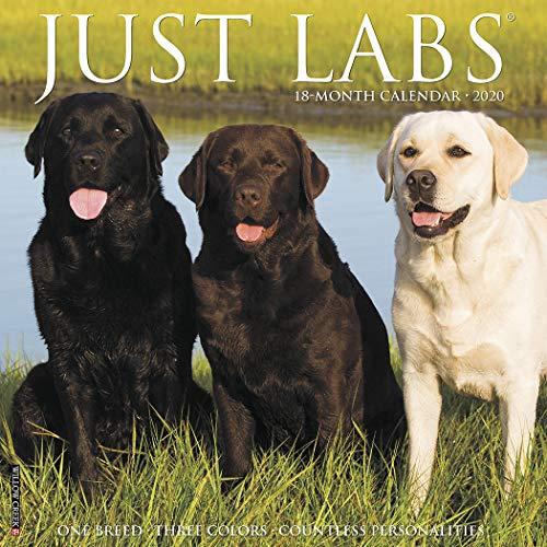 Just Labs - Just Labs 2020 Wall Calendar (Dog Breed Calendar)