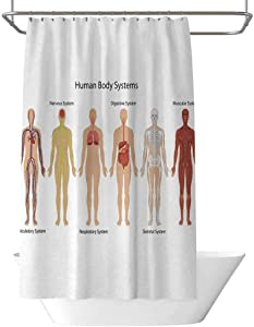 June Gissing Human Anatomy Shower Curtain Human Body with Central Nervous Network Skeleton and Neurons Image Muscle System Shower Curtain in Master Bathroom W95 x L70 Inch Multi