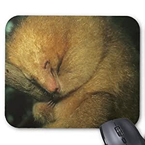 Brain114 Personalized Top-Quality Textured Surface Water Resistent Mousepad Sakura Flowers Road Customized Non-Slip Gaming Mouse Pads