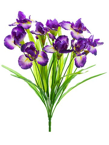22-Iris-Bush-x9-Purple-Blue-pack-of-12