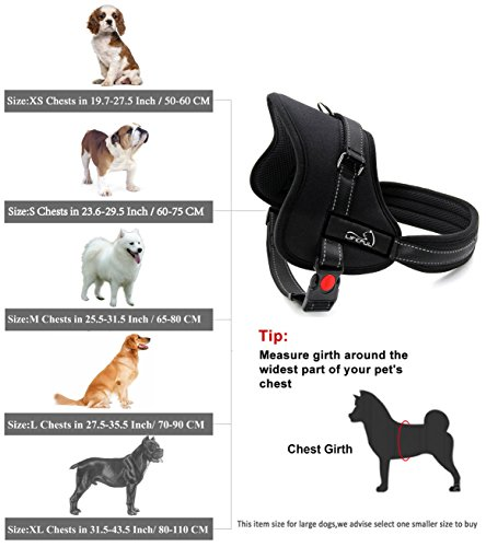 Buy harness for a pug