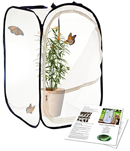 Oxel Insect and Butterfly Habitat - 24 Inches Tall
