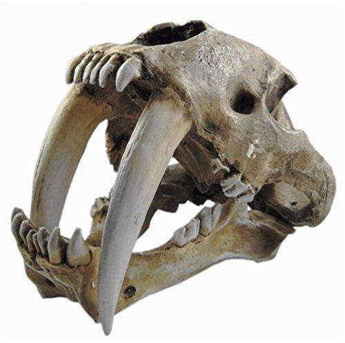 Gmasking Resin Smilodon Saber Tooth Tiger 1:1 Skull Replica(No Display Stand) by Gmasking (Image #3)