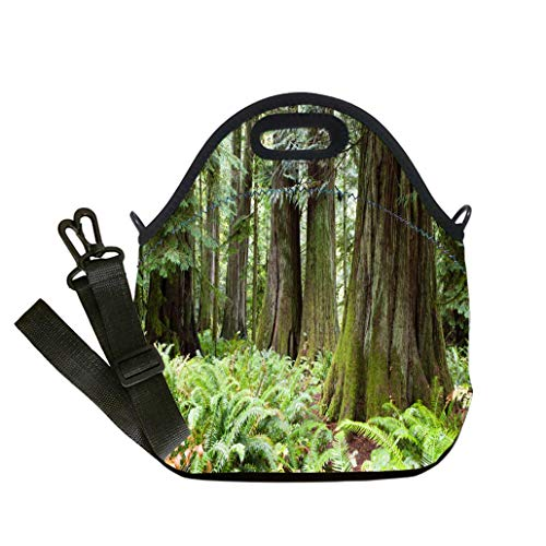 Insulated Lunch Bag, Reusable Outdoor Travel Picnic School MacMillan Provincial Park Cathedral Grove Vancouver Island Multicolor,for Adults and children waterproof Lunch Box