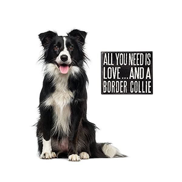 JennyGems - All You Need is Love and a Border Collie - Real Wood Stand Up Box Sign - Border Collie Gift Series - Border Collie Moms and Owners - Shelf Knick Knacks 4