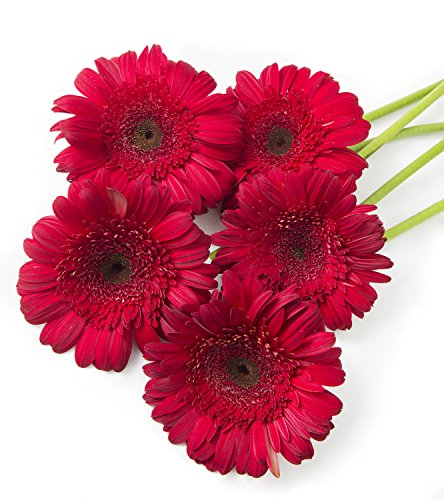 California Grown Bulk Flowers: 200 Assorted Gerbera Daisies (bulk flowers, 10 stem bunches, 20 bunches per (Gerbera Daisies 20 Stems)