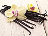 5 Rare Vanilla Planifolia Bean cuttings/Comes with The Easy Rooting Method/Indoor/Outdoor/Plants