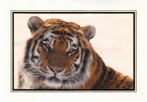 Geographics Greeting Cards - Unused Christmas Holiday Greeting Card Siberian Tiger National Geographic -- comes with an envelope
