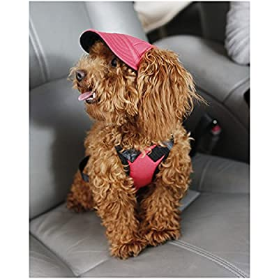 WINOMO Pet Dog Sports Hat Pet Dog Oxford Fabric Hat Sports Baseball Cap with Ear Holes for Small Dogs - Size S (Red)