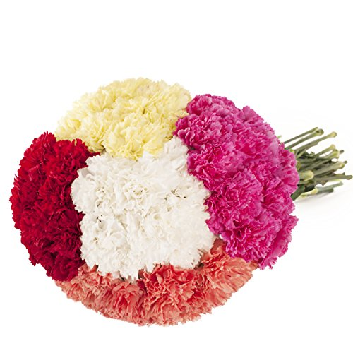 Farm Fresh Natural Assorted Carnation - 100 Stems by Bloomingmore