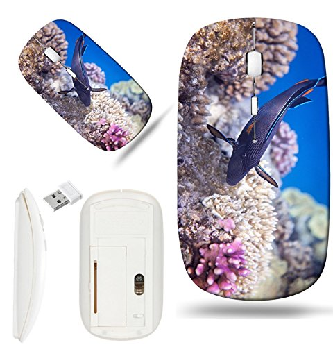 Red Sea Flora Base - Luxlady Wireless Mouse White Base Travel 2.4G Wireless Mice with USB Receiver, 1000 DPI for notebook, pc, laptop, macdesign IMAGE ID: 34984371 Sohal surgeonfish Flora and fauna of the Red Sea