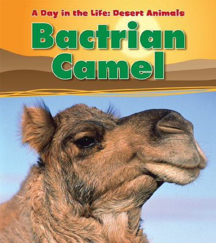 Bactrian Camel (A Day in the Life: Desert Animals)
