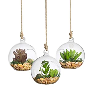 SunGrow Hanging Glass Terrariums, 3.11x3.45 Inches, Spherical Air Plant Orb, Handmade, Heat-Resistant Glass, Accessories Not Included, 3 Pack
