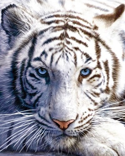White Tiger Bed Blanket