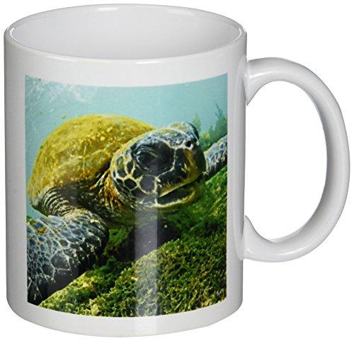 3dRose mug_10116_1 Pacific Green or Black Sea Turtle Feeding on Algae Punta Cormorant Floreana Island Galapagos, Ceramic Mug, 11-Ounce (Galapagos Turtle)