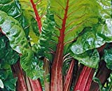 Rhubarb - Valentine - Rheum rhabarbarum - Super Heavy Established Crown/Roots - 6inch Pot - 1 Plant by Growers Solution