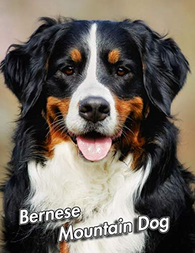 Bernese Mountain Dog: 2020 Weekly Calendar | 12 Months | 107 pages 8.5 x 11 in. | Planner | Diary | Organizer | Agenda | Appointment | Half Spread Blank Pages ()