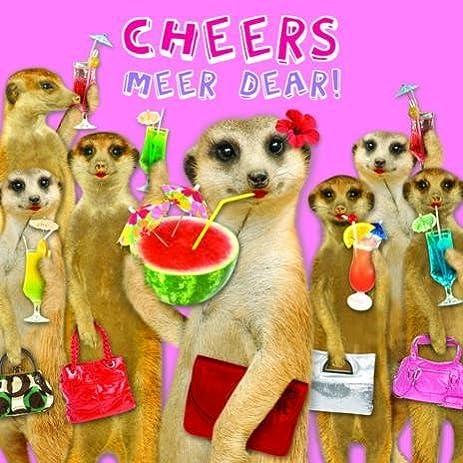 Amazon Cheers Meer Dear Meerkat Birthday Card By Quayside