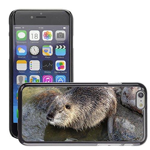 """Just Phone Cases Hard plastica indietro Case Custodie Cover pelle protettiva Per // M00127916 Ragondin Rat Eau Nager animale // Apple iPhone 6 PLUS 5.5"""""""