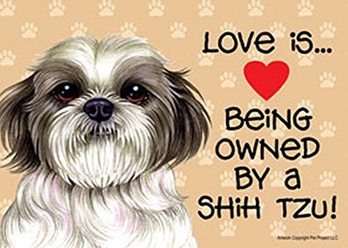 Love is… being owned by a Shih Tzu (Puppy) 5