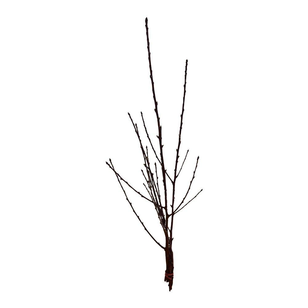 40 cm lang Kirschzweig-Dekoration echte Deko-Zweige mit Kirschbl/üten Fr/ühlingsstrau/ß Kirsche 5 Kirschzweige ca