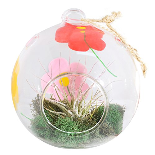 Costa Farms Live Air Plant in Exotic Angel Spring Flowers Glass Globe Terrarium, Great Gift