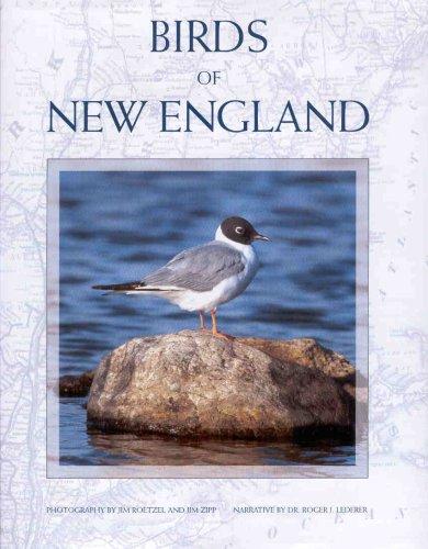 Birds of New England (Birds New England)