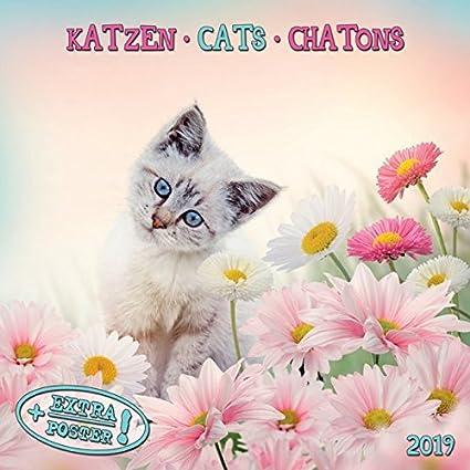 Calendario 2018 gatos y gatitos – gato tigre – gato – gato naturaleza – con Maxi póster 30 x 60 cm (TSH AP) + incluye un – Agenda de bolsillo 2018: Amazon.es: Oficina y papelería