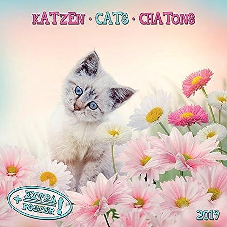 Calendario 2018 gatos y gatitos - gato tigre - gato - gato ...