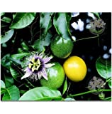 LILIKOI HAWAIIAN PASSION FRUIT SEEDS - 1 PACK -