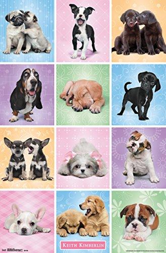 Trends International Puppies Cuties Wall Poster 22.375