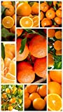 Homegrown Citrus Seeds Orange Seeds Clementine Seeds, 60, Bundle 12 Packets