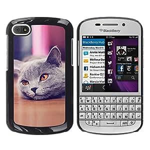 LECELL -- Funda protectora / Cubierta / Piel For BlackBerry Q10 -- Cute Beautiful British Cat Shorthair --