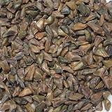 """Korean fir tree seeds - """" Abies koreana """" Blue cones . 30 seeds D55"""