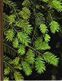img - for Evergreens (The Time-Life Encyclopedia of Gardening) book / textbook / text book