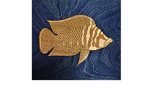 Altolamprologus Calvus Cichlid Fish Magnet