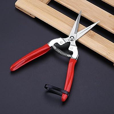 Duokon 1Pcs Sturdy Fruit Tree Scissor, Bonsai Gardening Pruning Shear Garden Scissors Pruner Tool (Straight): Automotive