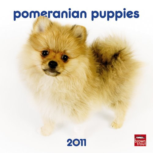 Pomeranian Puppies 2011 7X7 Mini Wall by BrownTrout Publishers Inc (2010-08-01)