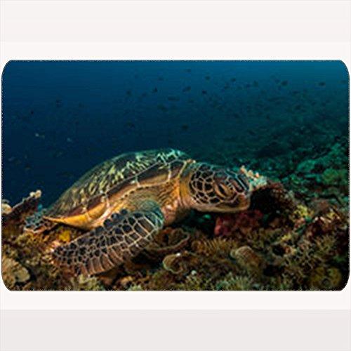 or Doormats Green Turtle Gili Islands Animals Wildlife Aquatic Home Welcome Doormat 16X24 Inches Indoor/Outdoor/Front Door/Bathroom Non Slip Mats ()