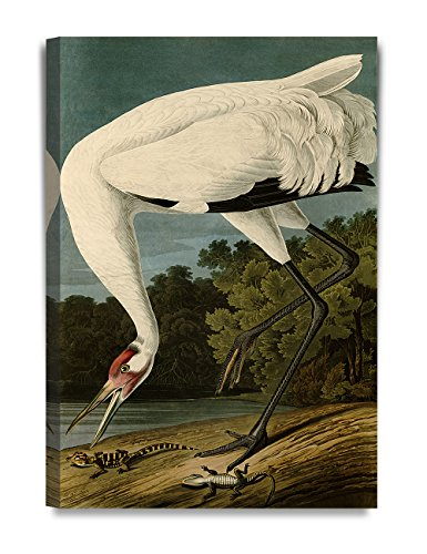 DECORARTS Whooping Crane by John James Audubon. Reproductions. Giclee Print w/Acrylic Coating on Canvas for Home Decor. 20x30 x (Audubon Canvas)