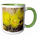 3dRose VWPics Flowers - Barrel Cactus flowers.(Ferocactus acanthodes).Anza-Borrego Desert State Park, California - 11oz Two-Tone Green Mug (mug_45947_7)