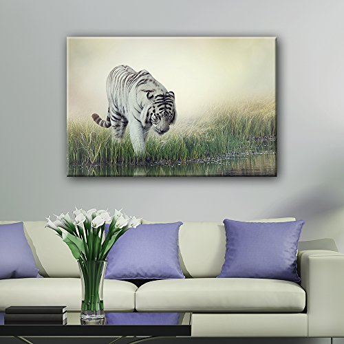 A White Tiger Wading in The Water
