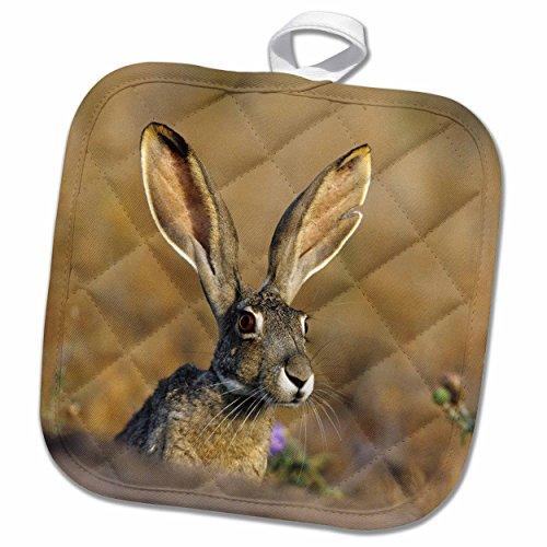 3dRose phl_251477_1 Pot Holder Black tailed Jack Rabbit, Starr County, Texas, 8 by 8