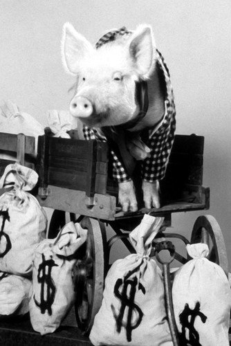 Green Acres Arnold the Pig Standing in Wagon 11x17 Mini - Green Acres Images