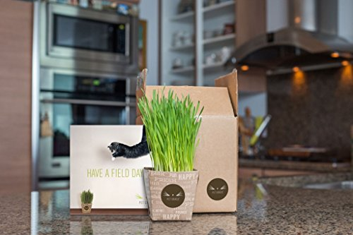 Fresh-Cat-Grass-Catnip-Combo-Delivery-Pet-Grass-Whisker-Greens-and-Whisker-Nip-Come-grown-and-fresh-to-your-Door