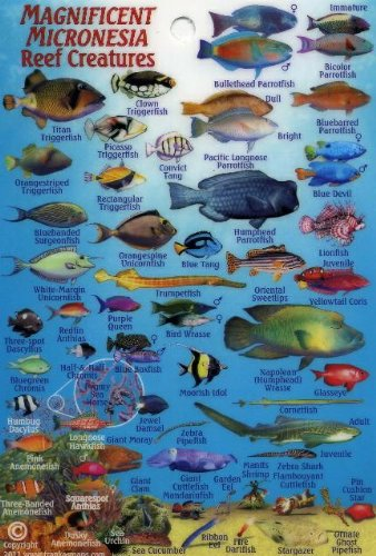 "Micronesia Coral Reef Creatures Guide Franko Maps Laminated Fish Card 4"" x 6"""