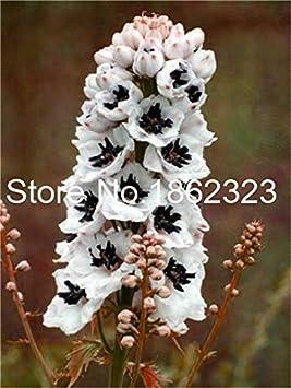 Bloom Green Co. 100 piezas de semillas de hortalizas Semillas de Okra Semillas de viagra naturales Plantas de Bonsai Semillas para el hogar y amp; jardín: 1
