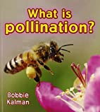 What Is Pollination? (Big Science Ideas (Paperback))