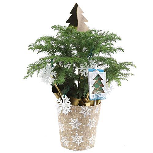 Christmas Led Lights Growing Plants